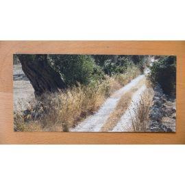 DECKERS carte postale Oliviers du Salento 6 Le chemin