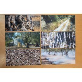 DECKERS Oliviers du Salento portfolio de 6 cartes postales
